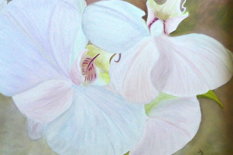 """White Orchids"", Oil, 16x20"