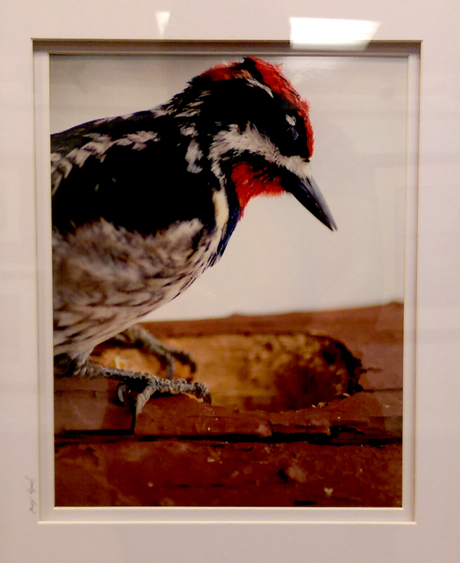 'The Woodpecker's Carving' Photography by Jennifer Longo